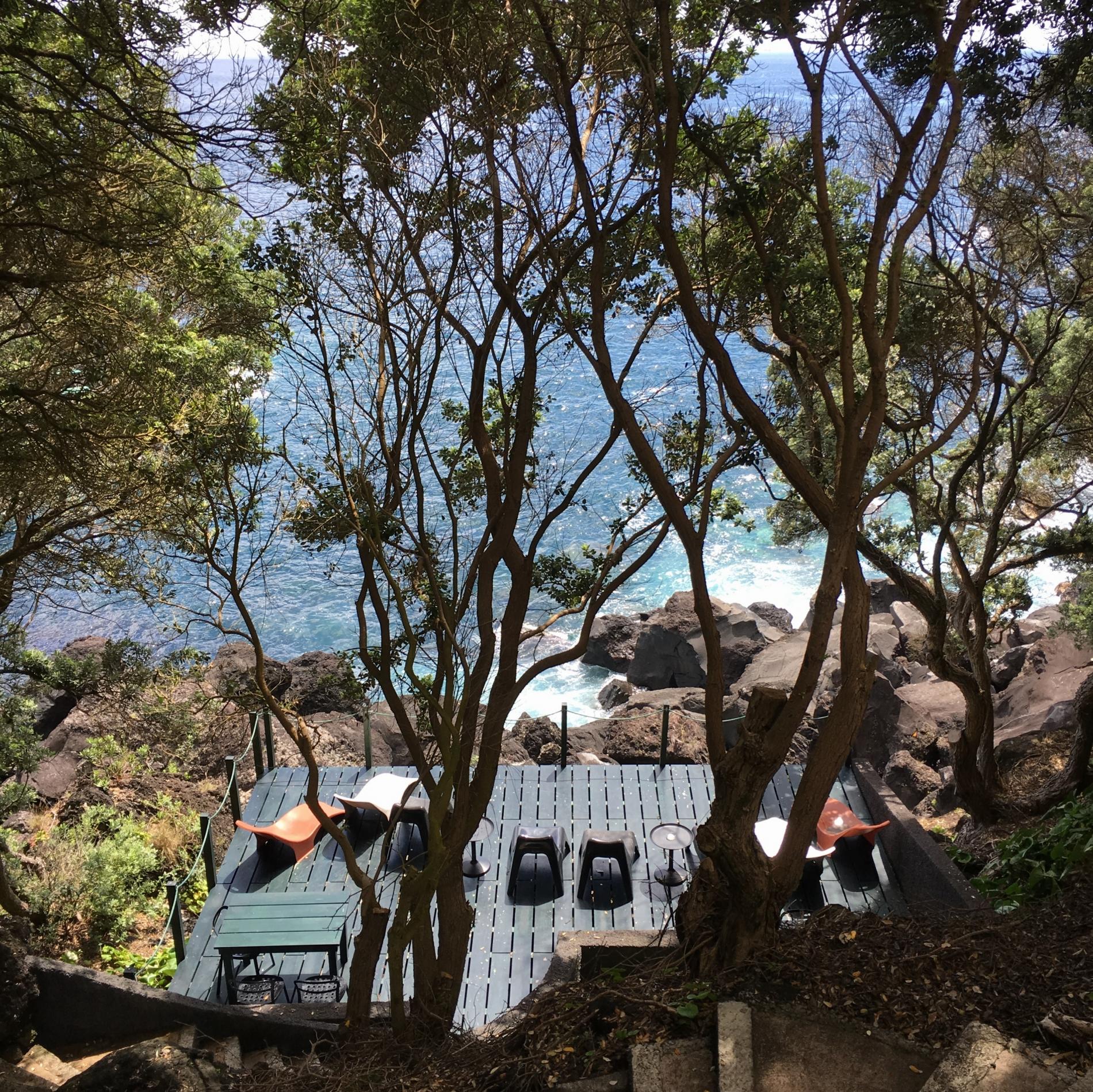hotel açores aldeia da fonte - dauphins et son bébé - consciences dauphins - nager avec les dauphins - nage avec les dauphins sauvages