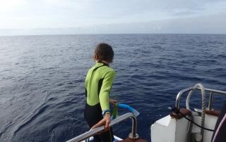 Sorties en mer Açores - dauphins et son bébé - consciences dauphins - nager avec les dauphins - nage avec les dauphins sauvages