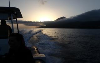 bateau au couché du soleil Açores - dauphins et son bébé - consciences dauphins - nager avec les dauphins - nage avec les dauphins sauvages