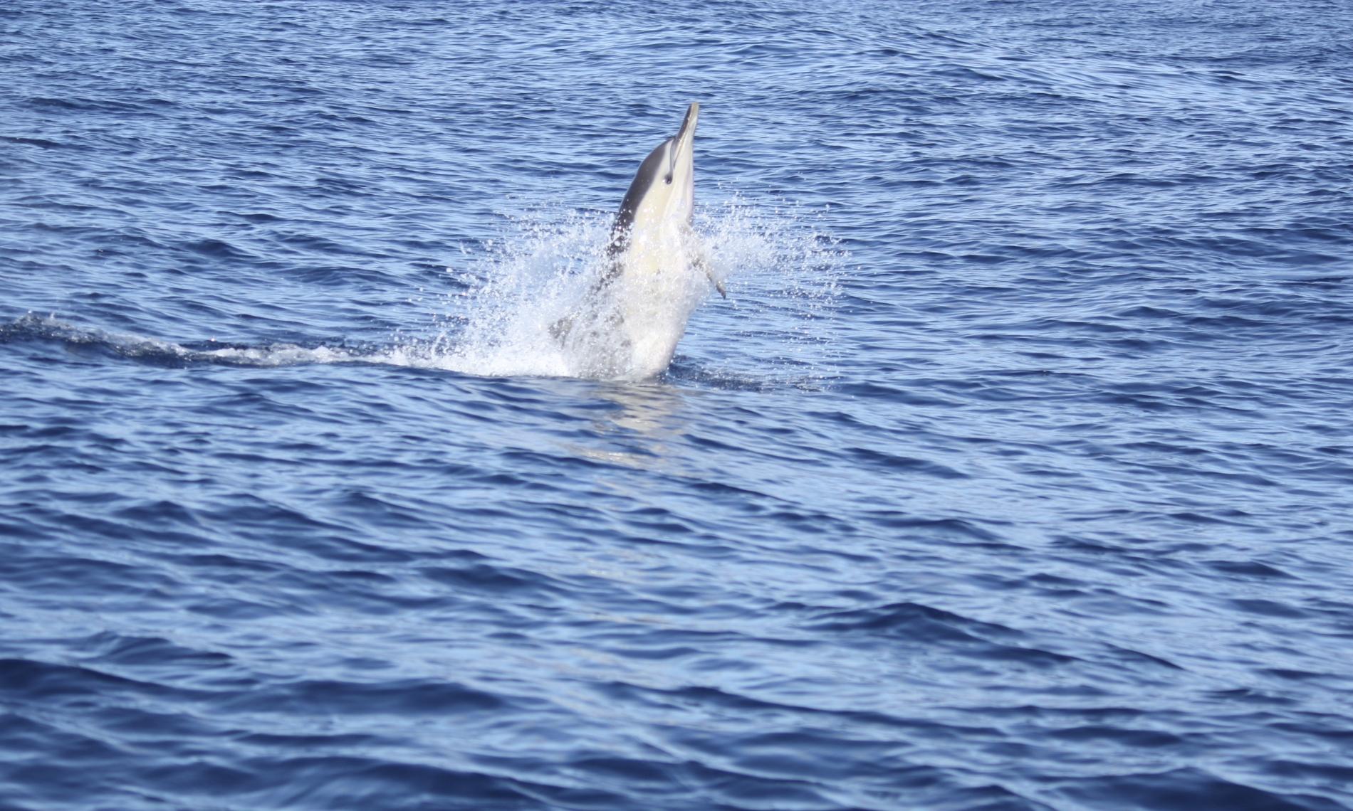 rencontre dauphin espagne