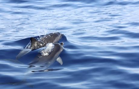 dauphins bulles - dauphins et son bébé - consciences dauphins - nager avec les dauphins - nage avec les dauphins sauvages