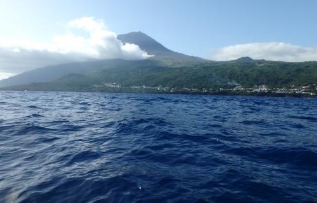 Mont Pico Volcan - dauphins et son bébé - consciences dauphins - nager avec les dauphins - nage avec les dauphins sauvages