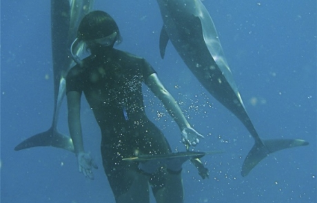 nager avec des dauphins - dauphins et son bébé - consciences dauphins - nager avec les dauphins - nage avec les dauphins sauvages