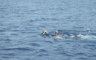 nager avec les dauphins - dauphins et son bébé - consciences dauphins - nager avec les dauphins - nage avec les dauphins sauvages