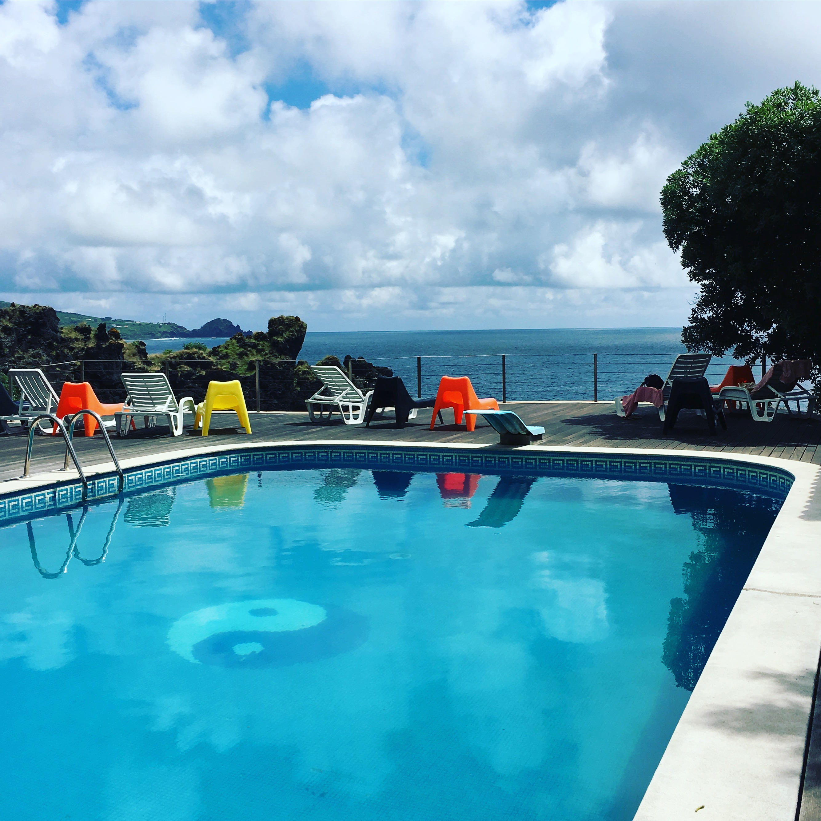 piscine hotel açores - dauphins et son bébé - consciences dauphins - nager avec les dauphins - nage avec les dauphins sauvages