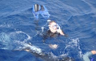 snorkeling aux Açores - dauphins et son bébé - consciences dauphins - nager avec les dauphins - nage avec les dauphins sauvages